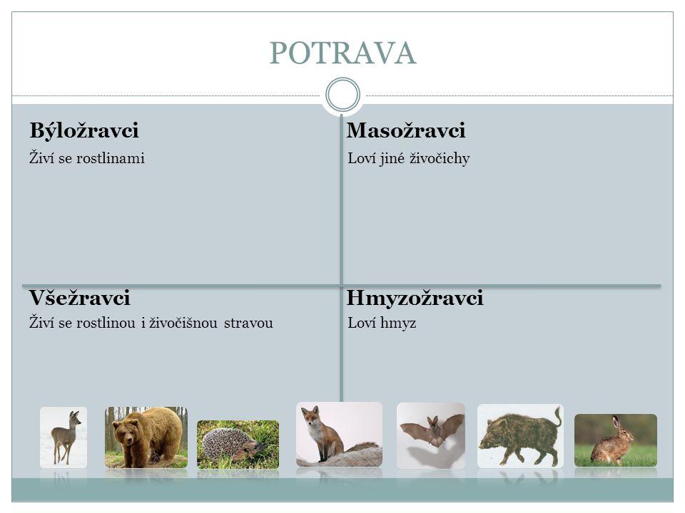 POTRAVA Býložravci Masožravci Živí se rostlinami Loví jiné živočichy Všežravci Hmyzožravci Živí se rostlinou i živočišnou stravou Loví hmyz