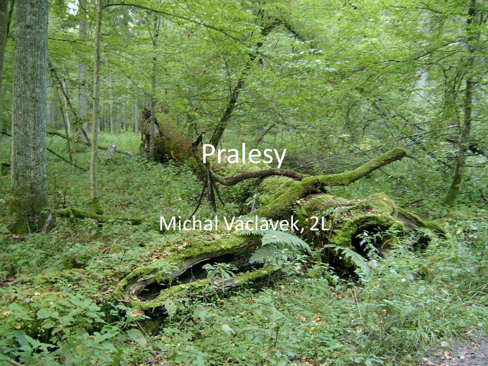 Pralesy Michal Václavek, 2L