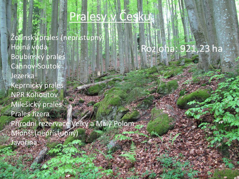 Pralesy v Česku Žofínský prales (nepřístupný) Hojná voda Boubínský prales Cahnov-Soutok Jezerka Keprnický prales NPR Kohoutov Milešický prales Prales Jizera Přírodní rezervace Velký a Malý Polom Mionší (nepřístupný) Javořina Rozloha: 921,23 ha