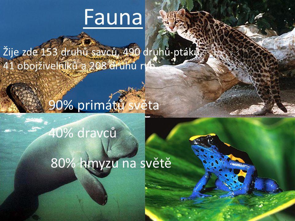 Fauna Žije zde 153 druhů savců, 490 druhů ptáků, 41 obojživelníků a 208 druhů ryb. 90% primátů světa 40% dravců 80% hmyzu na světě