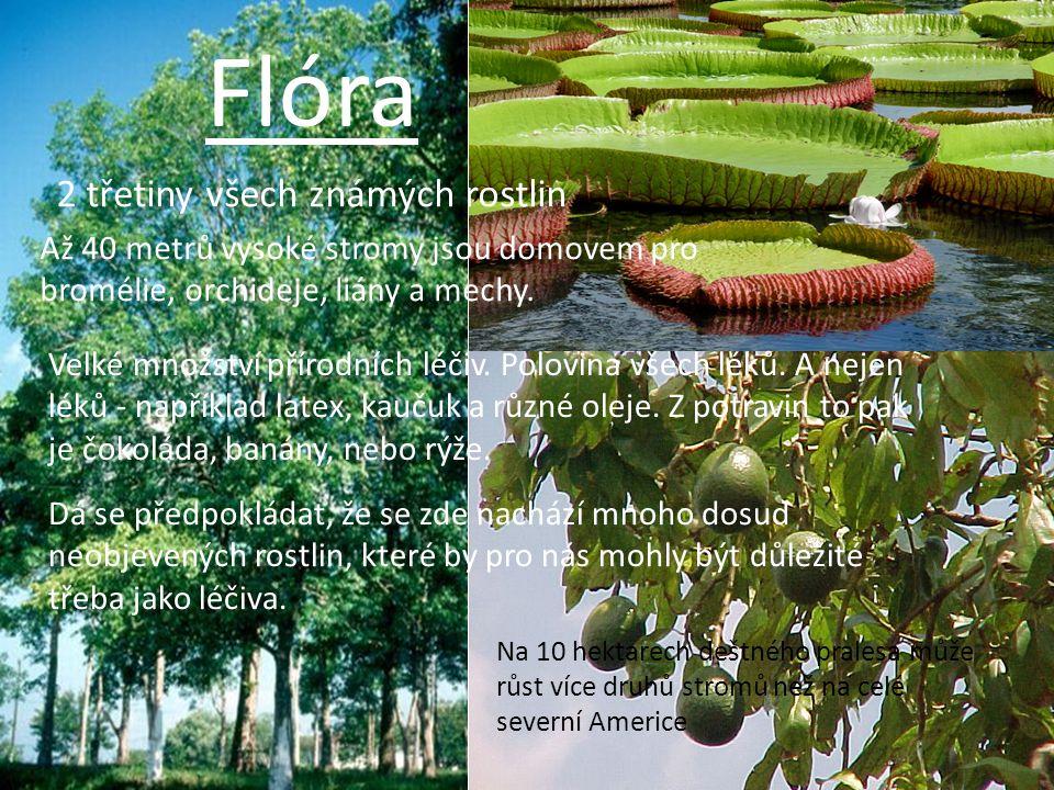 Flóra Až 40 metrů vysoké stromy jsou domovem pro bromélie, orchideje, liány a mechy. Velké množství přírodních léčiv. Polovina všech léků. A nejen lék