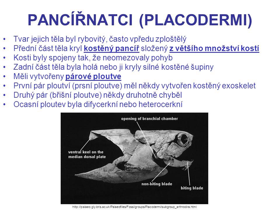 PANCÍŘNATCI (PLACODERMI) Na čelistech nebyly vytvořeny zuby, ale kostěné destičky s ostrými hranami Chorda byla zachována a nasedaly na ni horní a dolní obratlové oblouky Vnitřní kostra byla částečně chrupavčitá, částečně kostěná.