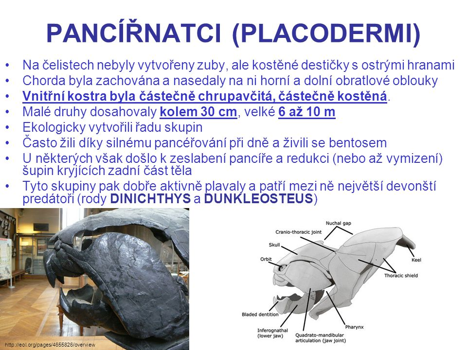 http://danielnavas3d.blogspot.cz/2010/09/dunkleosteus-zbrush.html http://www.youtube.com/watch?v=pbgJLPpDQlQ Viz také adresa: