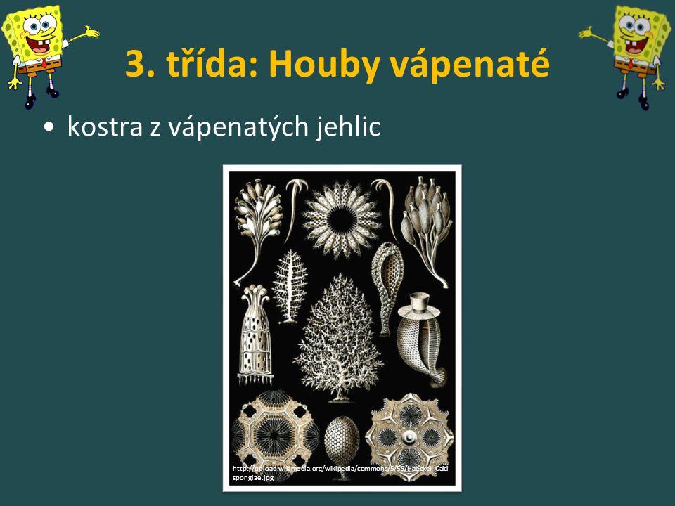 3. třída: Houby vápenaté kostra z vápenatých jehlic http://upload.wikimedia.org/wikipedia/commons/5/59/Haeckel_Calci spongiae.jpg