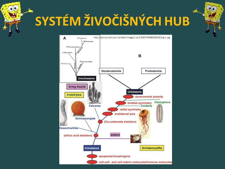 SYSTÉM ŽIVOČIŠNÝCH HUB http://ars.els-cdn.com/content/image/1-s2.0-S0074769604350023-gr1.jpg