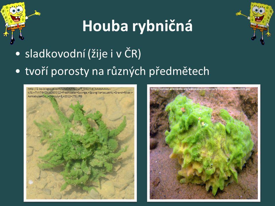 Houba rybničná sladkovodní (žije i v ČR) tvoří porosty na různých předmětech http://upload.wikimedia.org/wikipedia/commons/4/45/Spongilla_lacustris.jpghttp://2.bp.blogspot.com/-cXzCdLhKa2U/T_5AixrlIdI/AAAAAAAAJ- k/8JnTVV79KDY/s1600/12+Freshwater+Sponge,+Spongilla+lacustris,+Grand+River,+ Ashtabula+Co.,+OH+July+8,+2012+(73).JPG