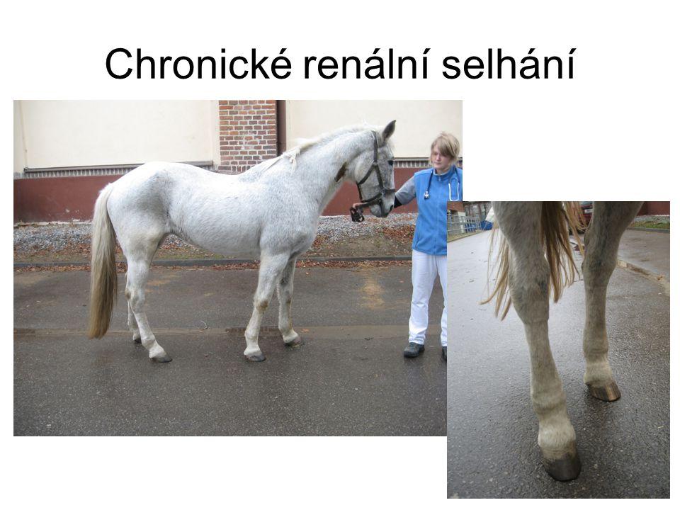 Chronické renální selhání