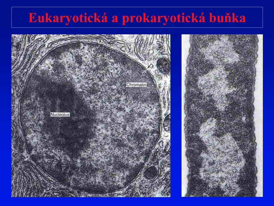 Eukaryotická a prokaryotická buňka
