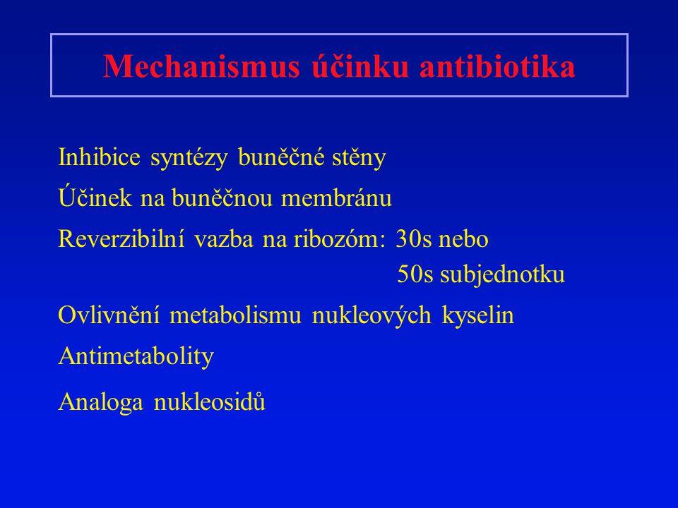 Inhibice syntézy buněčné stěny Beta-laktamy (peniciliny, cefalosporiny) vazbou na PBP (penicilin vázající protein) blokují tvorbu mureinu ( peptidoglykan) Oslabení zevní kostry bakterie Účinek na syntézu buněčné stěny mají i cykloserin, vankomycin, bacitracin a imidazolová antimykotika