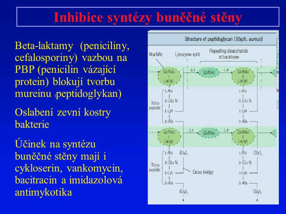 Inhibice syntézy buněčné stěny Beta-laktamy (peniciliny, cefalosporiny) vazbou na PBP (penicilin vázající protein) blokují tvorbu mureinu ( peptidogly