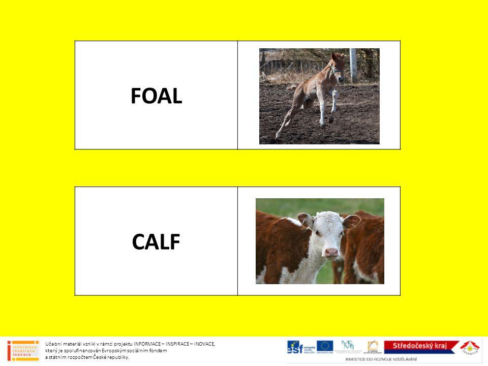 FOAL CALF Učební materiál vznikl v rámci projektu INFORMACE – INSPIRACE – INOVACE, který je spolufinancován Evropským sociálním fondem a státním rozpočtem České republiky.