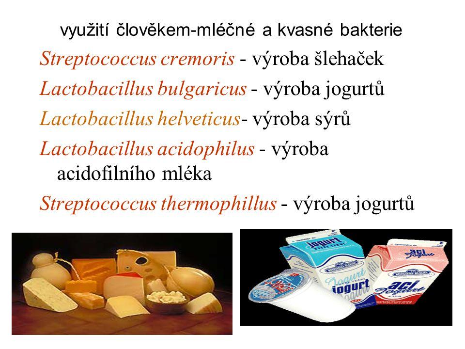 využití člověkem-mléčné a kvasné bakterie Streptococcus cremoris - výroba šlehaček Lactobacillus bulgaricus - výroba jogurtů Lactobacillus helveticus- výroba sýrů Lactobacillus acidophilus - výroba acidofilního mléka Streptococcus thermophillus - výroba jogurtů