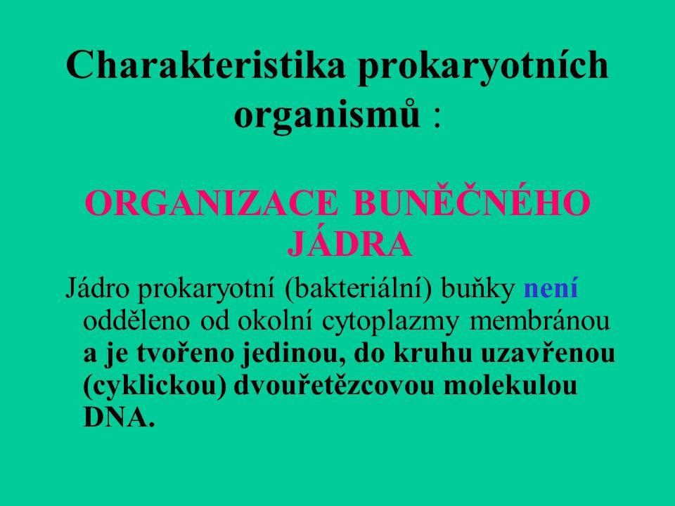 Charakteristika prokaryotních organismů : ORGANIZACE BUNĚČNÉHO JÁDRA Jádro prokaryotní (bakteriální) buňky není odděleno od okolní cytoplazmy membránou a je tvořeno jedinou, do kruhu uzavřenou (cyklickou) dvouřetězcovou molekulou DNA.