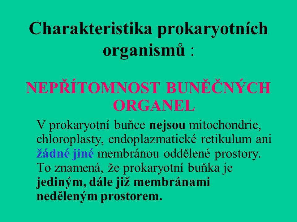 Charakteristika prokaryotních organismů : NEPŘÍTOMNOST BUNĚČNÝCH ORGANEL V prokaryotní buňce nejsou mitochondrie, chloroplasty, endoplazmatické retikulum ani žádné jiné membránou oddělené prostory.