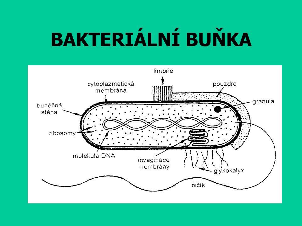 2) paraziti – patogenní bakterie-vyvolá onemocnění původce salmonelózy původce angíny nebo spály původce tuberkulózy (Kochův bacil) Robert Koch
