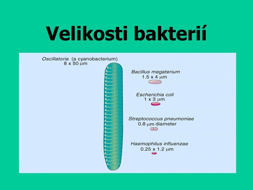 Velikosti bakterií