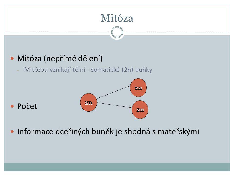 Mitóza Mitóza (nepřímé dělení) - Mitózou vznikají tělní - somatické (2n) buňky Počet Informace dceřiných buněk je shodná s mateřskými 2n 2n 2n
