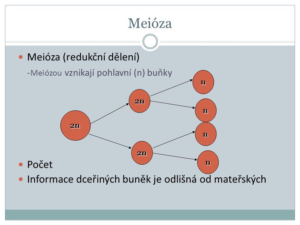 Meióza Meióza (redukční dělení) - Meiózou vznikají pohlavní (n) buňky Počet Informace dceřiných buněk je odlišná od mateřských 2n n n 2n n n 2n