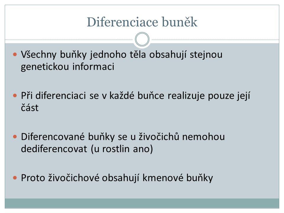 Diferenciace buněk Všechny buňky jednoho těla obsahují stejnou genetickou informaci Při diferenciaci se v každé buňce realizuje pouze její část Difere