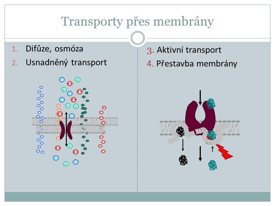 Transporty přes membrány 1. Difůze, osmóza 2. Usnadněný transport 3. Aktivní transport 4. Přestavba membrány + ++ - - - - - + + + + - + P
