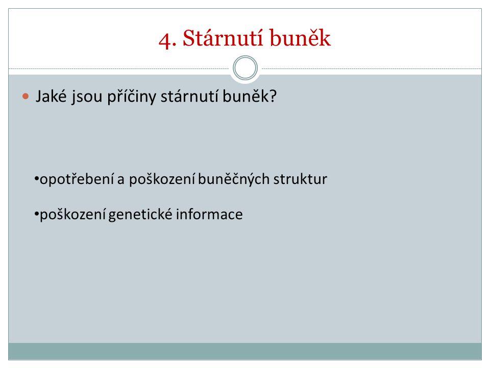 4. Stárnutí buněk Jaké jsou příčiny stárnutí buněk? opotřebení a poškození buněčných struktur poškození genetické informace