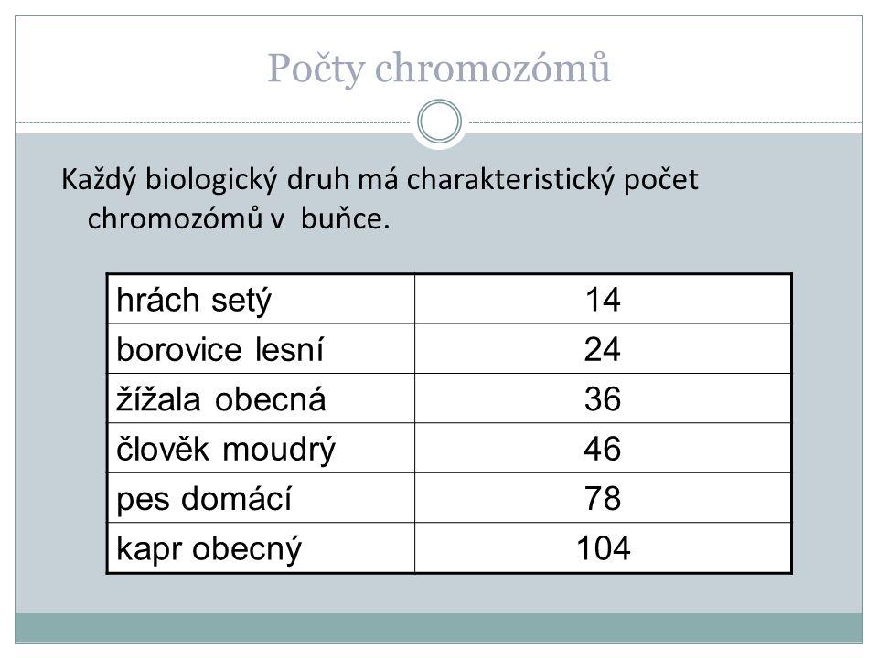 Počet chromozómů Jak dělíme buňky mnohobuněčného organismu podle počtu chromozómů?