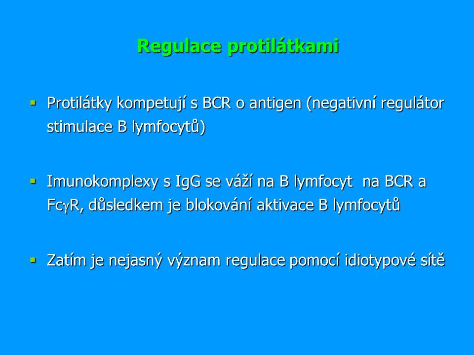 Regulace cytokiny a mezibuněčným kontaktem  Interakce APC - T lymfocyt  Interakce T H 1 – makrofág  Interakce T H 2 – B lymfocyt  Vzájemná regulace aktivit T H 1 versus T H 2  Vývoj subpopulací leukocytů  Negativní regulace efektorových lymfocytů:  CTLA-4 inhibiční receptor T lymfocytů, váže ligandy CD80 a CD86  Inhibiční receptory NK buněk  Sebedestrukční interakce apoptotického receptoru Fas s ligandem FasL na povrchu aktivovaných T lymfocytů