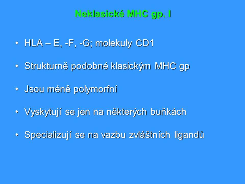 Neklasické MHC gp. I HLA – E, -F, -G; molekuly CD1HLA – E, -F, -G; molekuly CD1 Strukturně podobné klasickým MHC gpStrukturně podobné klasickým MHC gp