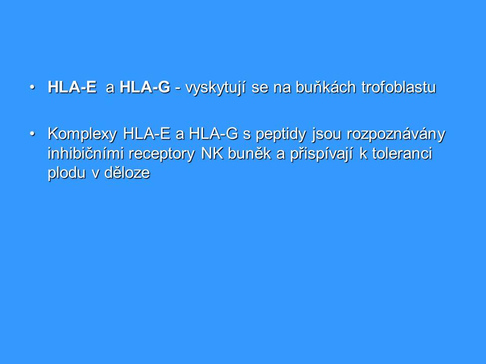 HLA-E a HLA-G - vyskytují se na buňkách trofoblastuHLA-E a HLA-G - vyskytují se na buňkách trofoblastu Komplexy HLA-E a HLA-G s peptidy jsou rozpoznáv
