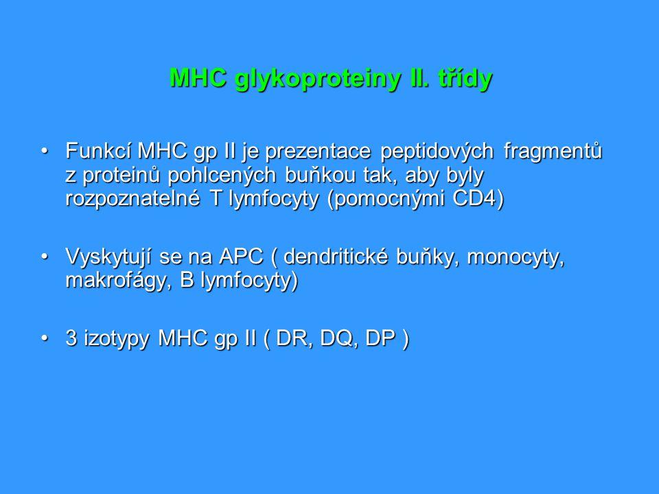MHC glykoproteiny II. třídy Funkcí MHC gp II je prezentace peptidových fragmentů z proteinů pohlcených buňkou tak, aby byly rozpoznatelné T lymfocyty