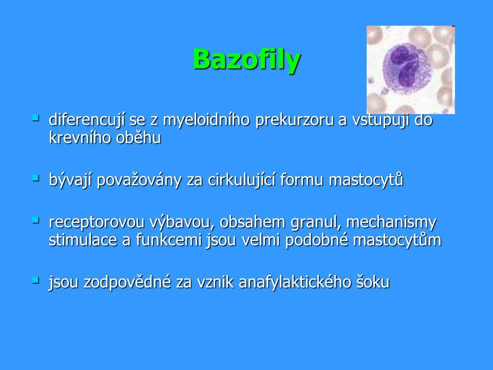 Bazofily  diferencují se z myeloidního prekurzoru a vstupují do krevního oběhu  bývají považovány za cirkulující formu mastocytů  receptorovou výba