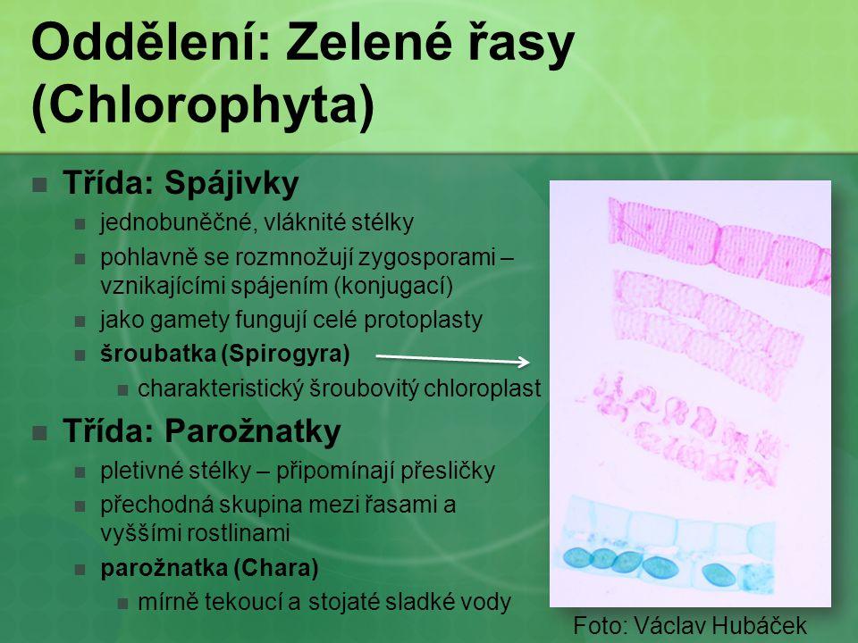 Oddělení: Zelené řasy (Chlorophyta) Třída: Spájivky jednobuněčné, vláknité stélky pohlavně se rozmnožují zygosporami – vznikajícími spájením (konjugac