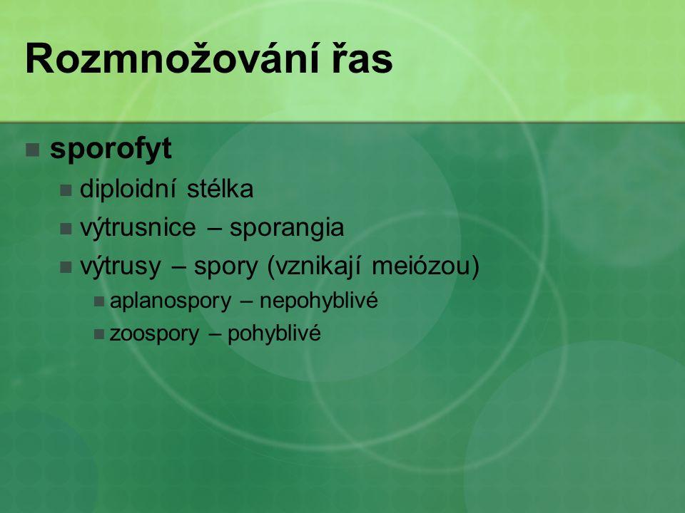 Rozmnožování řas sporofyt diploidní stélka výtrusnice – sporangia výtrusy – spory (vznikají meiózou) aplanospory – nepohyblivé zoospory – pohyblivé