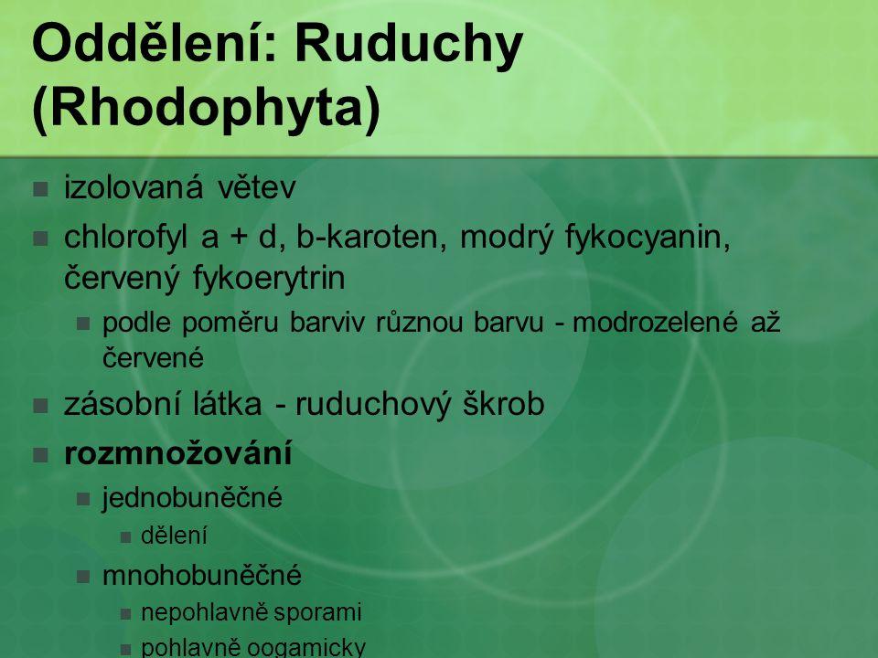 Oddělení: Ruduchy (Rhodophyta) izolovaná větev chlorofyl a + d, b-karoten, modrý fykocyanin, červený fykoerytrin podle poměru barviv různou barvu - mo