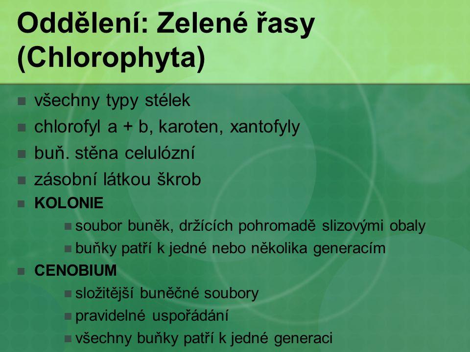 Oddělení: Zelené řasy (Chlorophyta) všechny typy stélek chlorofyl a + b, karoten, xantofyly buň. stěna celulózní zásobní látkou škrob KOLONIE soubor b