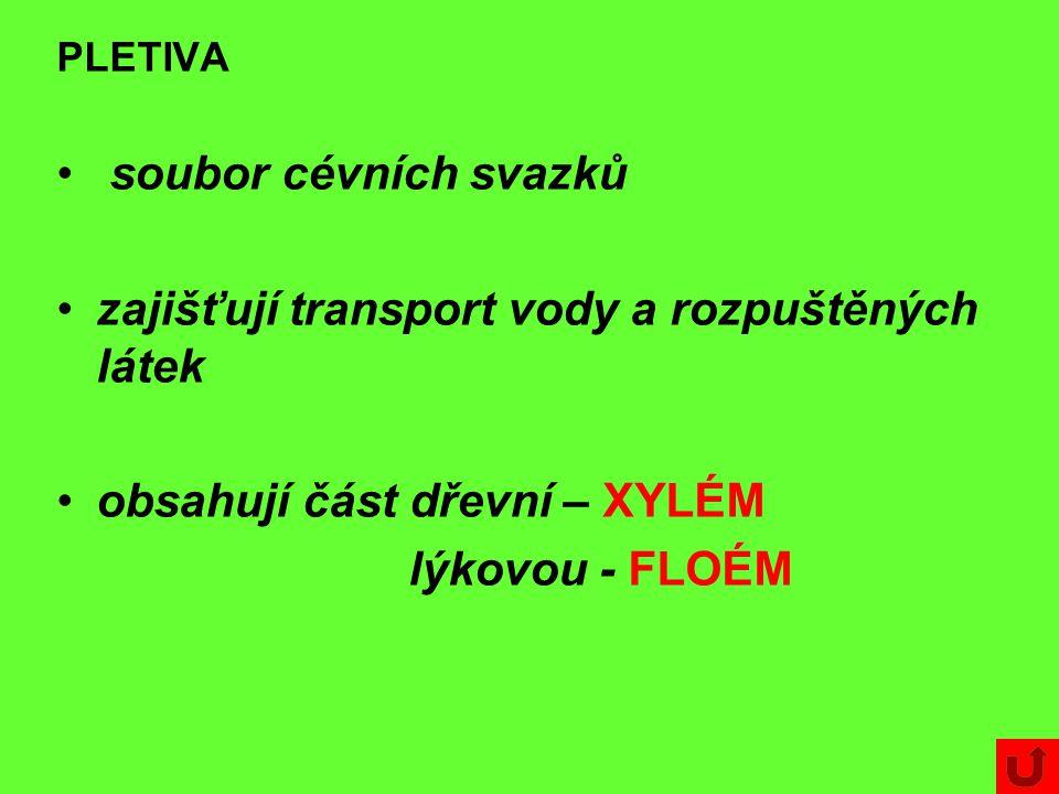 PLETIVA soubor cévních svazků zajišťují transport vody a rozpuštěných látek obsahují část dřevní – XYLÉM lýkovou - FLOÉM
