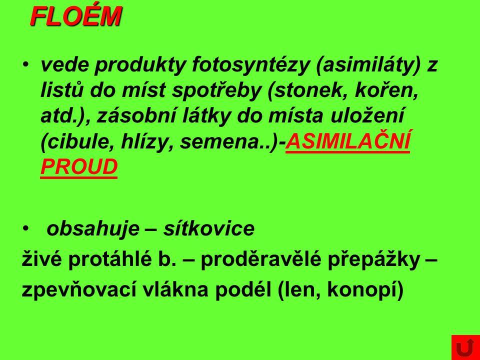 FLOÉM vede produkty fotosyntézy (asimiláty) z listů do míst spotřeby (stonek, kořen, atd.), zásobní látky do místa uložení (cibule, hlízy, semena..)-ASIMILAČNÍ PROUD obsahuje – sítkovice živé protáhlé b.
