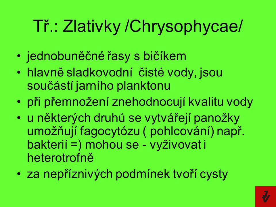 Tř.: Zlativky /Chrysophycae/ jednobuněčné řasy s bičíkem hlavně sladkovodní  čisté vody, jsou součástí jarního planktonu při přemnožení znehodnocují