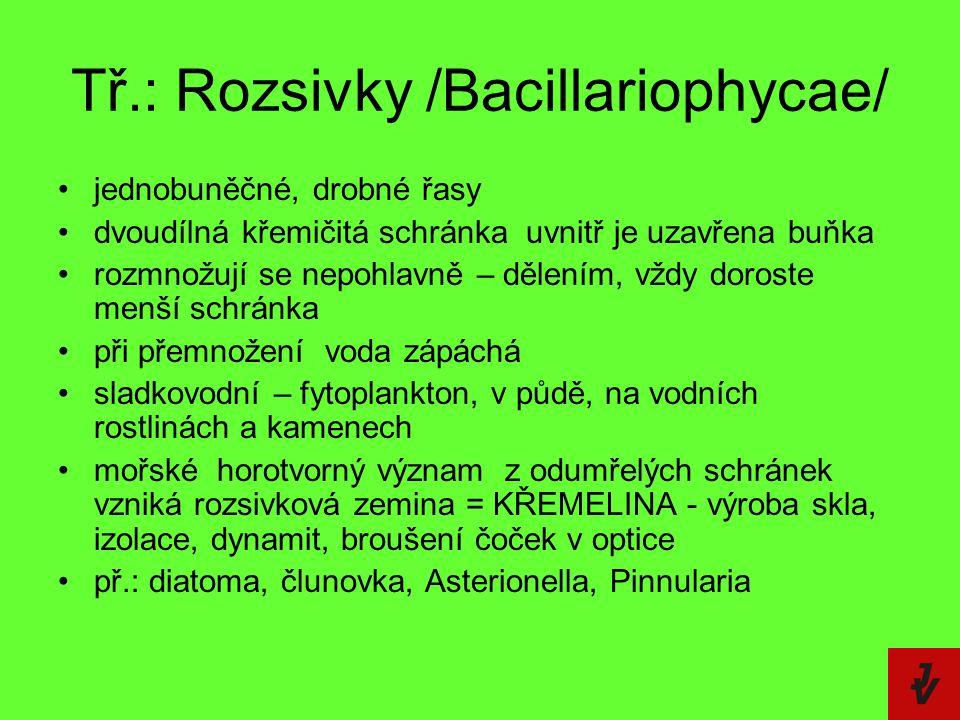 Tř.: Rozsivky /Bacillariophycae/ jednobuněčné, drobné řasy dvoudílná křemičitá schránka  uvnitř je uzavřena buňka rozmnožují se nepohlavně – dělením,
