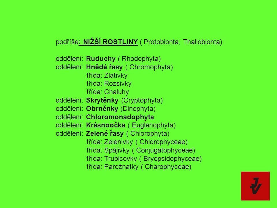 podříše: NIŽŠÍ ROSTLINY ( Protobionta, Thallobionta) oddělení: Ruduchy ( Rhodophyta) oddělení: Hnědé řasy ( Chromophyta) třída: Zlativky třída: Rozsiv