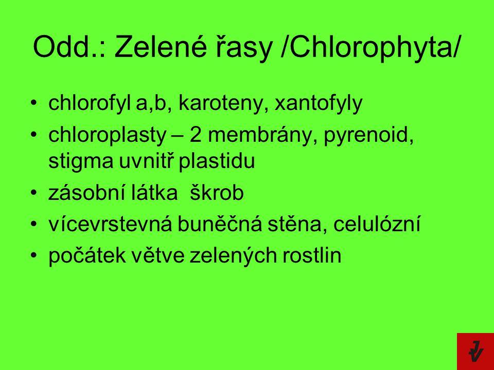 Odd.: Zelené řasy /Chlorophyta/ chlorofyl a,b, karoteny, xantofyly chloroplasty – 2 membrány, pyrenoid, stigma uvnitř plastidu zásobní látka  škrob v