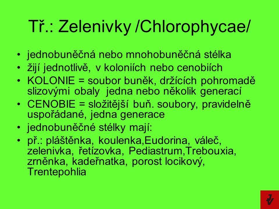 Tř.: Zelenivky /Chlorophycae/ jednobuněčná nebo mnohobuněčná stélka žijí jednotlivě, v koloniích nebo cenobiích KOLONIE = soubor buněk, držících pohro