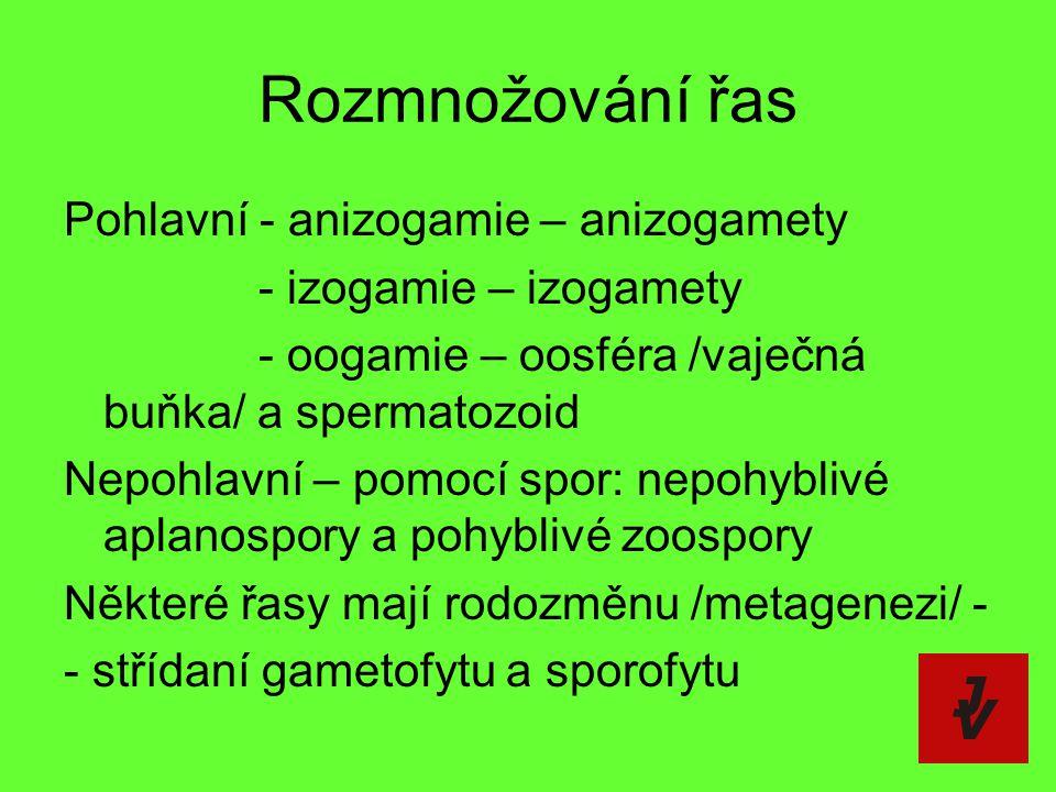 Rozmnožování řas Pohlavní - anizogamie – anizogamety - izogamie – izogamety - oogamie – oosféra /vaječná buňka/ a spermatozoid Nepohlavní – pomocí spo