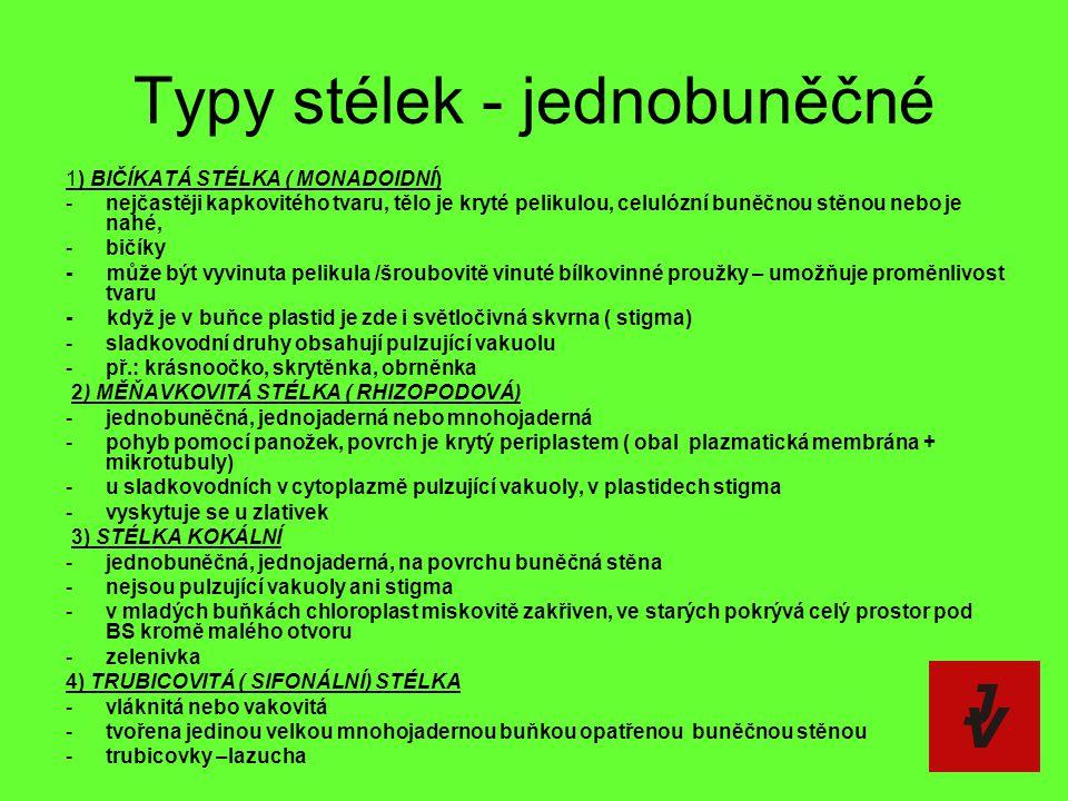 Typy stélek - jednobuněčné 1) BIČÍKATÁ STÉLKA ( MONADOIDNÍ) -nejčastěji kapkovitého tvaru, tělo je kryté pelikulou, celulózní buněčnou stěnou nebo je