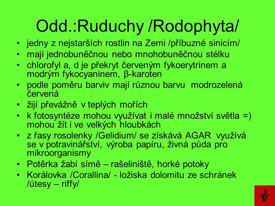 Odd.:Ruduchy /Rodophyta/ jedny z nejstarších rostlin na Zemi /příbuzné sinicím/ mají jednobuněčnou nebo mnohobuněčnou stélku chlorofyl a, d je překryt
