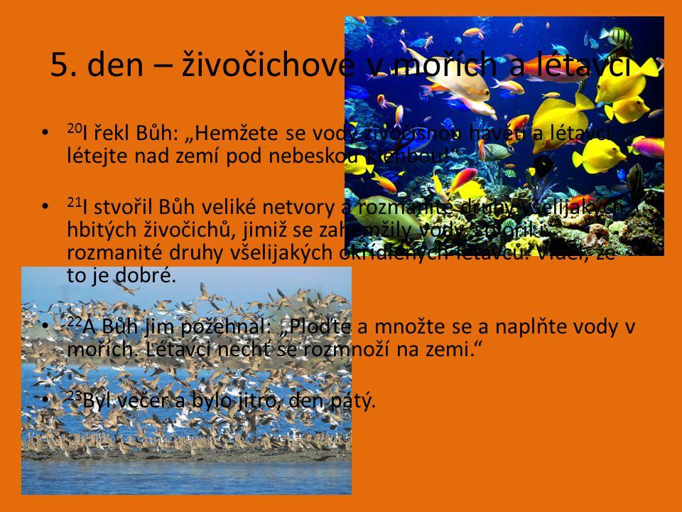 """5. den – živočichové v mořích a létavci 20 I řekl Bůh: """"Hemžete se vody živočišnou havětí a létavci létejte nad zemí pod nebeskou klenbou!"""" 21 I stvoř"""