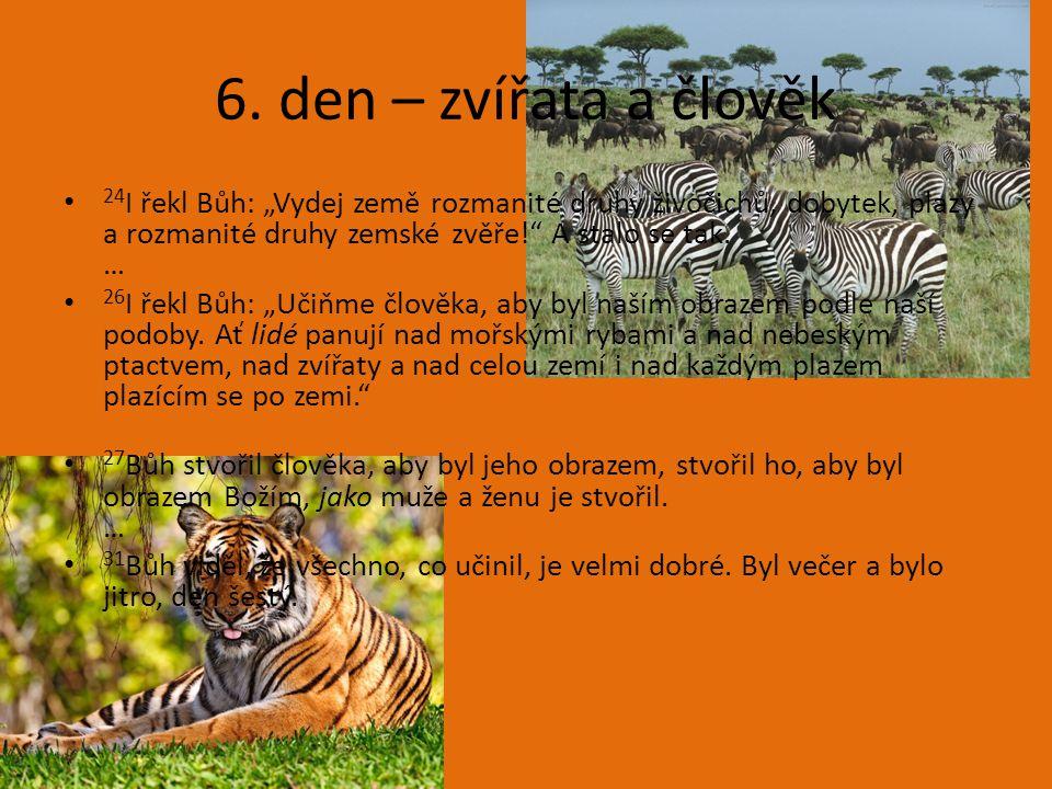 """6. den – zvířata a člověk 24 I řekl Bůh: """"Vydej země rozmanité druhy živočichů, dobytek, plazy a rozmanité druhy zemské zvěře!"""" A stalo se tak. … 26 I"""