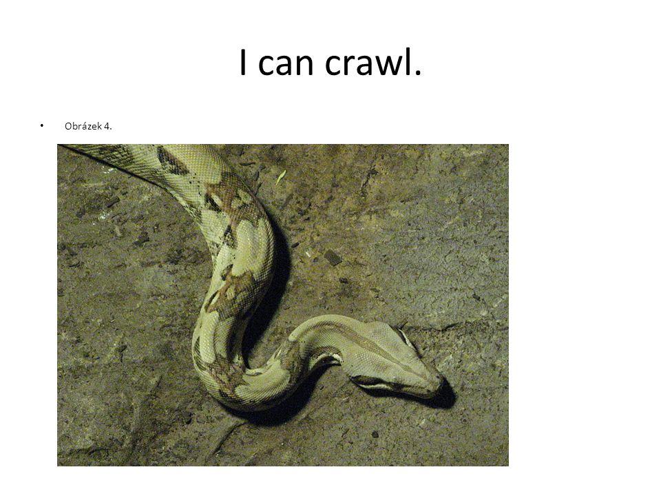 I can crawl. Obrázek 4.