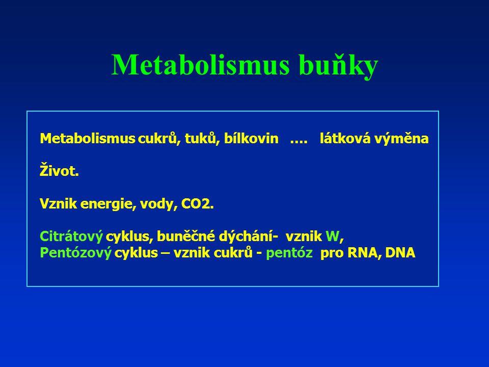 Metabolismus buňky Metabolismus cukrů, tuků, bílkovin ….