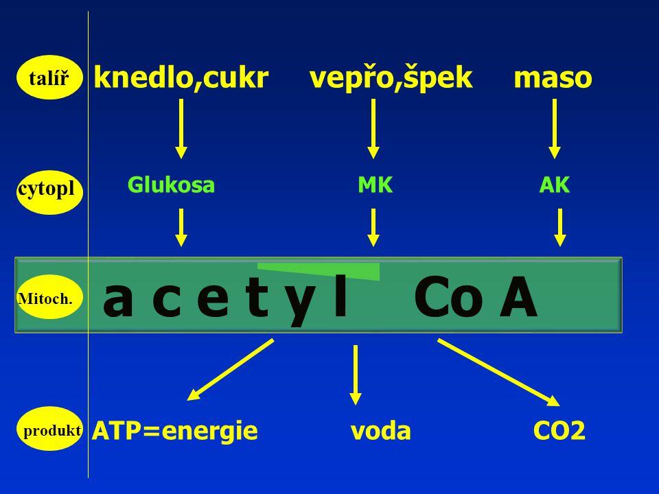 knedlo,cukr vepřo,špek maso Glukosa MK AK ATP=energie voda CO2 talíř a c e t y l Co A cytopl produkt Mitoch.